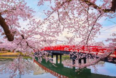 Wycieczka zagraniczna do Japonii – poznaj Kraj Kwitnącej Wiśni